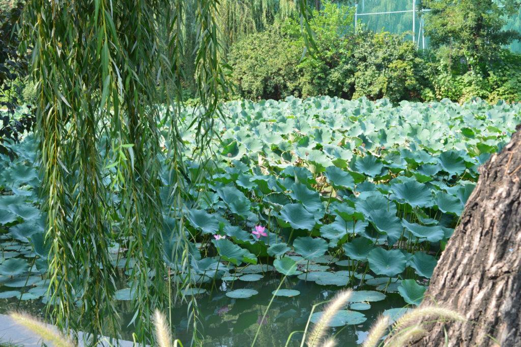 Parques de Pekín, China